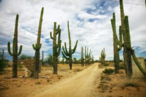 FactFrenzy - Cactus and Photosynthesis